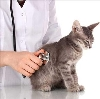 Ветеринарные клиники в Красной Горе